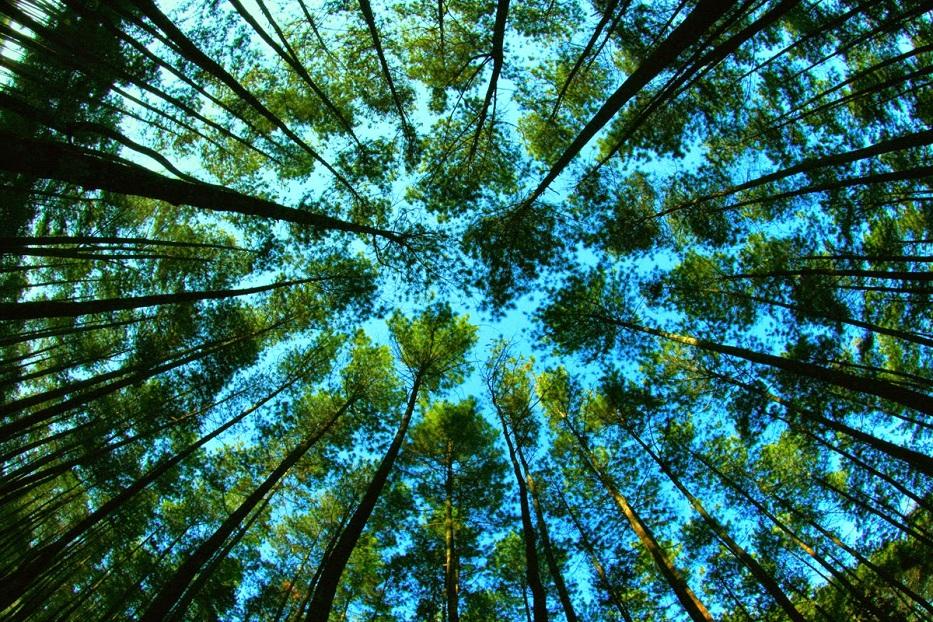 5 Kekayaan Alam Indonesia Ini Terbaik Dunia Lho
